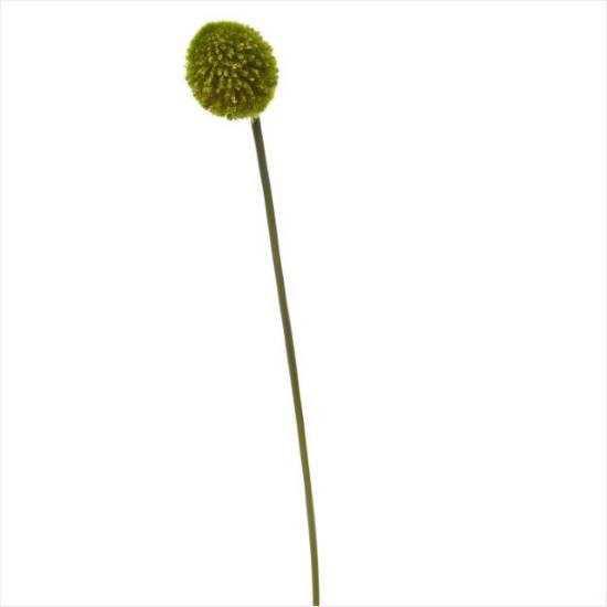 Зображення Алліум штучний FLORISTA Зелений H:78 см. 10204876