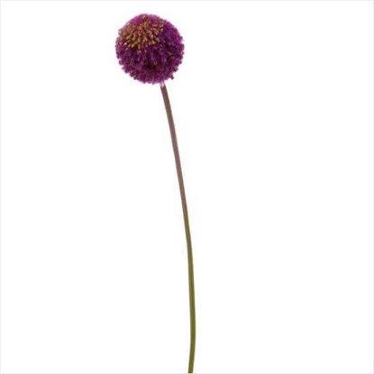 Зображення Алліум штучний FLORISTA Бузковий H:78 см. 10204877