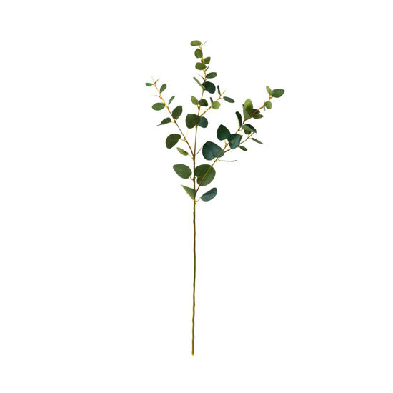 Изображение Ветка эвкалипта FLORISTA Зеленый L:70 см. 10208758