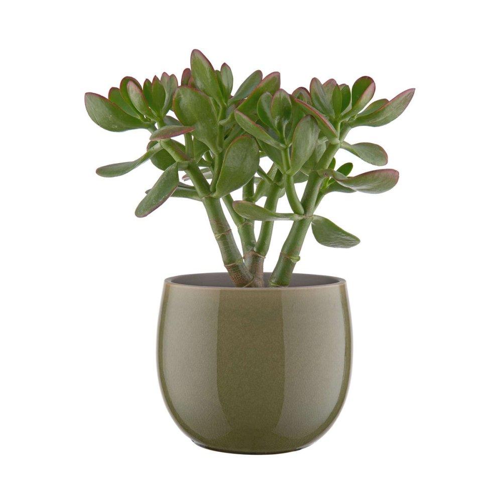 Зображення Горщик для квітів TERRANO Зелений O:15 см. H:13 см. 10224197